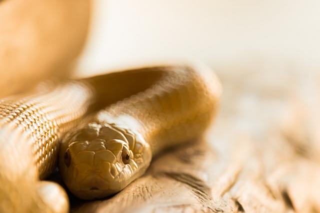 優しそうなヘビ
